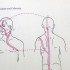 Chinese+Acupuncture+and+Moxibustina